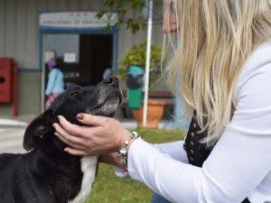 O animal é muito bem tratado pelos funcionários do hospital, que ficaram tocados com o amor do cão. (Foto: Reprodução / Luiz Souza / RBS TV)