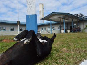 Negão é um cão muito manso, dócil e até já ganhou uma casinha em um espaço do lado de fora do hospital. (Foto: Reprodução / Luiz Souza / RBS TV)
