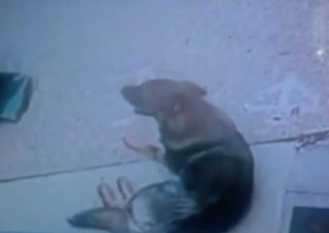 O cão na calçada depois que seu tutor voltou. (Foto: Reprodução / AOL News)