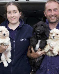 Após o resgate os animais foram encaminhados para a SPCA da Irlanda, onde estão recebendo todos os cuidados e logo em breve serão colocados para adoção. (Foto: Reprodução / ISPCA)
