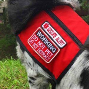 Na maioria dos casos, os cães de serviço usam algum tipo de colete para alertar para a sua função. (Foto: Reprodução / Hailey Ashmore)