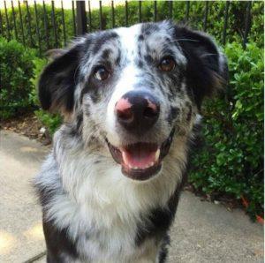 É difícil resistir a tanta fofura, mas é preciso respeitar os cães de serviço. (Foto: Reprodução / Hailey Ashmore)