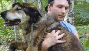 O cão, já idoso, estava bastante cansado e se deixou resgatar facilmente. (Foto: Conway Area Humane Society)