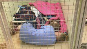 Funcionária foi encontrada deitada no chão ao lado do cão. (Foto: Reprodução / Conway Area Humane Society)