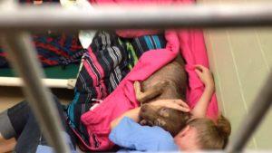 Chrissy é um exemplo de funcionária que trabalha em abrigos por amor aos animais. (Foto: Reprodução / Conway Area Humane Society)