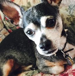 O cão Hook salvou a vida de sua tutora. (Foto: Reprodução / Hero Dog Awards)