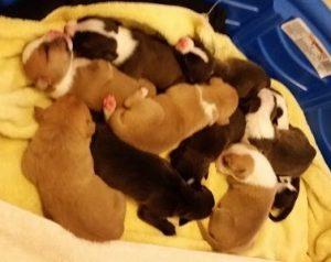 Os filhotes haviam nascido fazia poucos dias. (Foto: Reprodução / Sacramento SPCA)