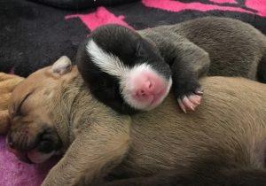 A família será colocada para adoção em cerca de dois meses. (Foto: Reprodução / Sacramento SPCA)