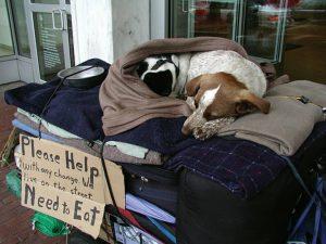 Projeto My Dog Eats First ajuda a alimentar animais de estimação de moradores de rua. (Foto: Reprodução / Facebook My Dog Eats First)