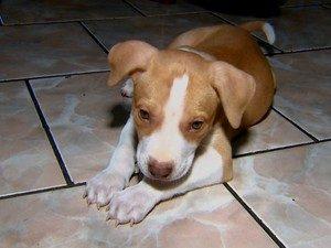 Ao chegar na casa de sua tutora, o cão precisava de ajuda até para comer. (Foto: Reprodução / Reginaldo dos Santos / EPTV)