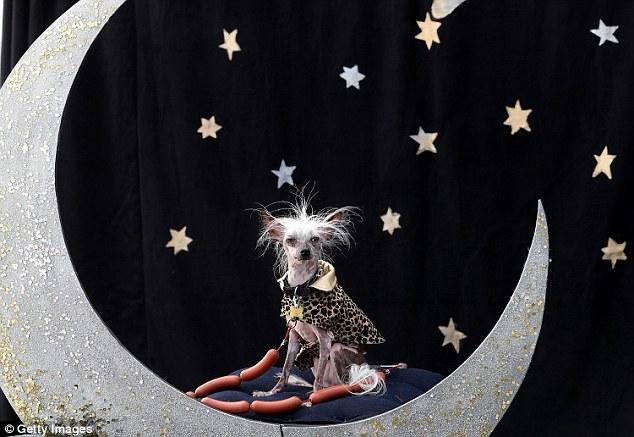 A cachorra Rascal Deux. (Foto: Reprodução / Daily Mail UK)