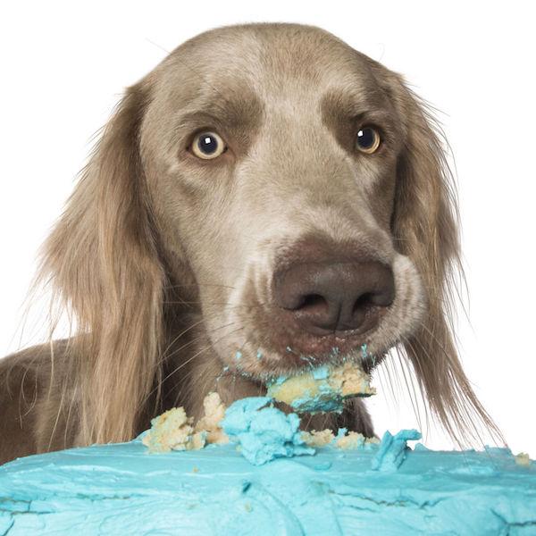 dogs-cake-09