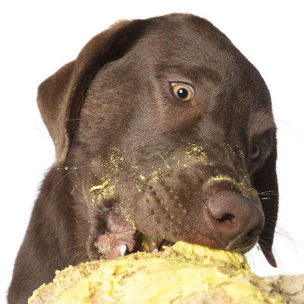 dogs-cake-11