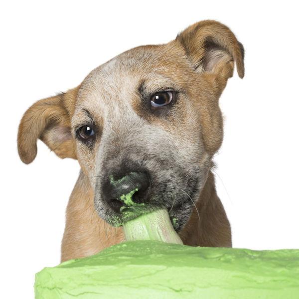 dogs-cake-12