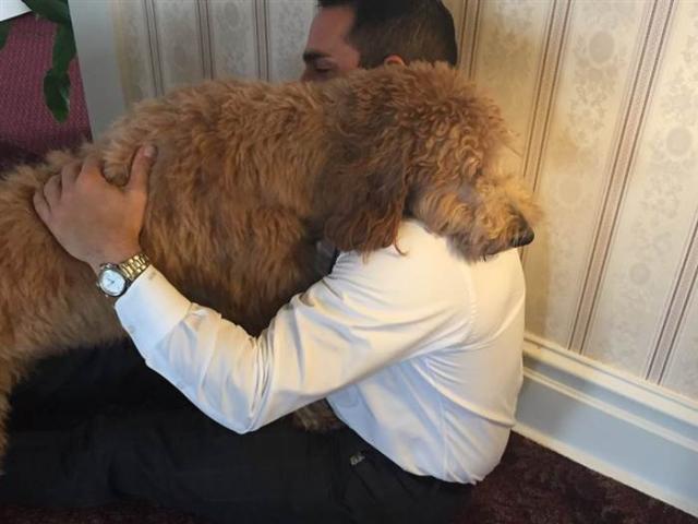 A cachorra Lulu consola os clientes da funerária. (Foto: Reprodução / Today.com)