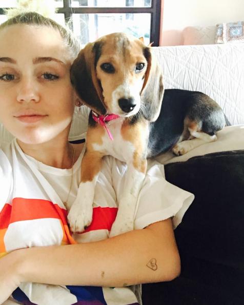Miley Cyrus com a beagle Barbie. (Foto: Reprodução / Instagram)