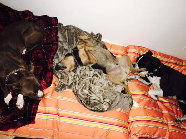 Alguns dos outros cães da cantora. (Foto: Reprodução / Instagram)