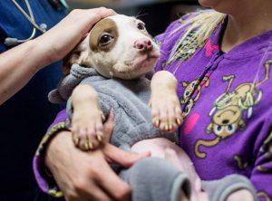 """Essas """"hospedagens"""" por uma noite também têm a intenção de dar aos cães um descanso dos abrigos. (Foto: Reprodução / LifeLine Animal Project)"""