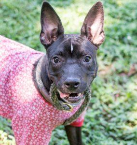 Abrigo está liberando cães para passar uma noite na casa de possíveis adotantes. (Foto: Reprodução / LifeLine Animal Project)