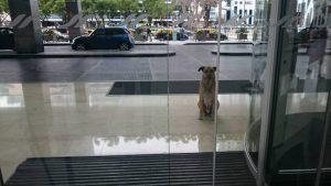 O cão então passou a esperar por Olivia na porta do hotel em que ela estava. (Foto: Reprodução / Mascotas Puerto Madero Adopciones Responsables)