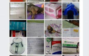 Os participantes do grupo postam fotos de medicamentos que estão precisando e de remédios que podem doar. (Foto: Reprodução / Facebook Farmácia Veterinária Comunitária)