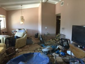 Os cães estavam vivendo em um ambiente imundo e em meio a animais mortos. (Foto: Reprodução / Riverside County Animal Services)