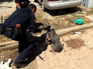 Todos os animais estavam famintos e extremamente desnutridos. (Foto: Reprodução / Riverside County Animal Services)