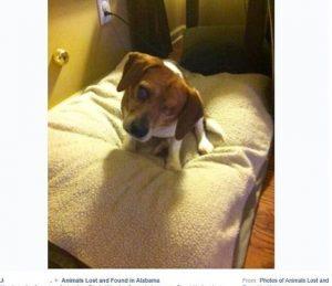Foi com essa foto divulgada no Facebook, após o resgate do cão, que Micah se apaixonou por Shep. (Foto: Reprodução / Micah Larsen Brannon)