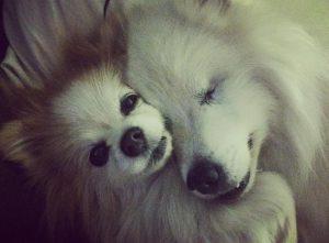 Hoshi tranquilizou Zen quando ele chegou na nova casa, pois o pequeno estava muito nervoso. (Foto: Reprodução / Instagram the.fluffy.duo)