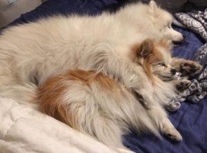 Os cães se tornaram amigos desde o primeiro momento. (Foto: Reprodução / Instagram the.fluffy.duo)