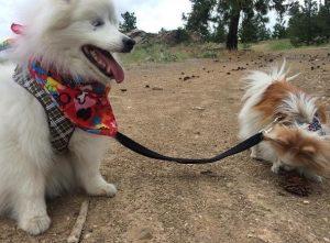 Zen guia Hoshi nas caminhadas e se certifica de que ele saiba para onde deve seguir. (Foto: Reprodução / Instagram the.fluffy.duo)