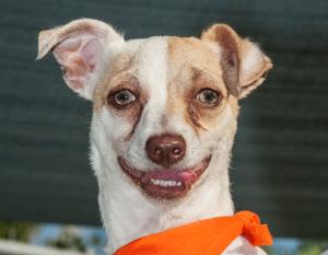 Cão conseguiu se recuperar e se livrar completamente da droga que tinha em seu organismo. (Foto: Reprodução / Mark Rightmire / OC Register)