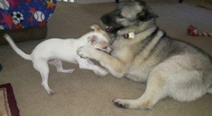 Além de papai e mamãe, Bubba tem também uma irmã canina para brincar com ele. (Foto: Reprodução / Life With Dogs)