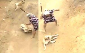 Cão foi agredido a pauladas por idosa que era sua própria tutora. (Foto: Reprodução / Aqui Notícias)