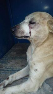 O animal ficou gravemente ferido. (Foto: Reprodução / Extra)