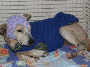 Após denúncias da vizinhança, o cão foi levado pelo CCZ local e depois seguiu para uma clínica particular. (Foto: Reprodução / Prefeitura Municipal de Cachoeiro de Itapemirim)