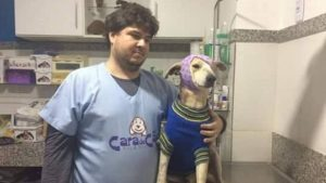 Apesar de o caso ser grave, o animal já apresenta melhoras em seu quadro de saúde. (Foto: Reprodução / Facebook Patas de Rua)