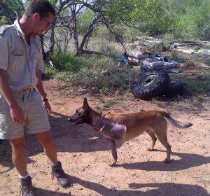 Um dia, enquanto procurava um rinoceronte ferido, o cão saltou em umas rochas e acabou quebrando a perna. (Foto: Reprodução / Transfrontier Africa)