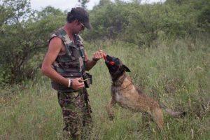 Shaya é um cão que trabalha ajudando a salvar a vida de animais selvagens na África. (Foto: Reprodução / Transfrontier Africa)