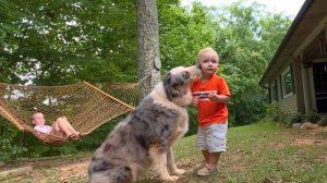 O cão Shiloh e seu irmãozinho humano Bryson são melhores amigos e fazem tudo juntos. (Foto: Reprodução / Life With Dogs)