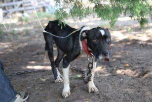 O caso era grave e a expectativa era de que ela tinha apenas poucos dias de vida. (Foto: Reprodução / SPCA do Texas / Madeline Yeaman)