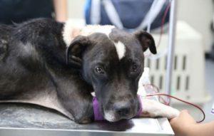 Gwen recebeu, além de cuidados, muito amor e atenção. (Foto: Reprodução / SPCA do Texas / Madeline Yeaman)