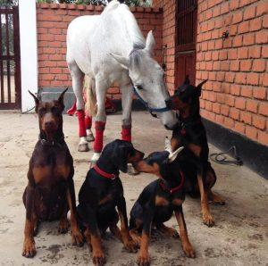 A turma de amigos fica completa com o cavalo Contino. (Foto: Reprodução / Instagram @thedobieteam)