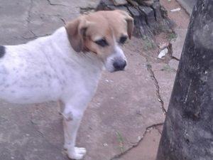 Cãozinho caiu de carroceria de veículo e espera por seu tutor no mesmo lugar há quase uma semana. (Foto: Reprodução / Denise Arroyo)