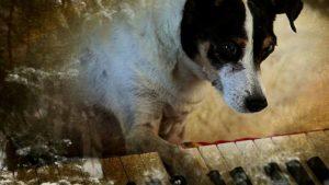 O documentário tyraz diversos vídeos e imagens da cadelinha Lolabelle. (Foto: Reprodução / Divulgação)