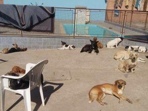 Mayara cuida de mais de 40 cães em sua própria casa. (Foto: Reprodução / Mayara Valério)