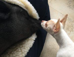 Blue age como mãe de Peach e as as duas compartilham um vínculo muito especial. (Foto: Reprodução / Jahara Zamora)