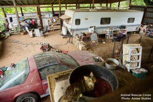 Os locais não tinham nenhuma estrutura para a criação de animais. (Foto: Reprodução / Animal Rescue Corps / Amiee Stubbs)