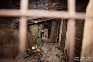 Os animais viviam em péssimas condições. (Foto: Reprodução / Animal Rescue Corps / Amiee Stubbs)