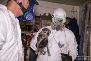 No segundo local os animais viviam em meio a muita sujeira e uma grande quantidade de fezes. (Foto: Reprodução / Animal Rescue Corps / Amiee Stubbs)